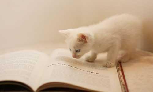 Kindle用の電子書籍の制作方法